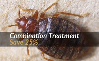 Bed Bug Special