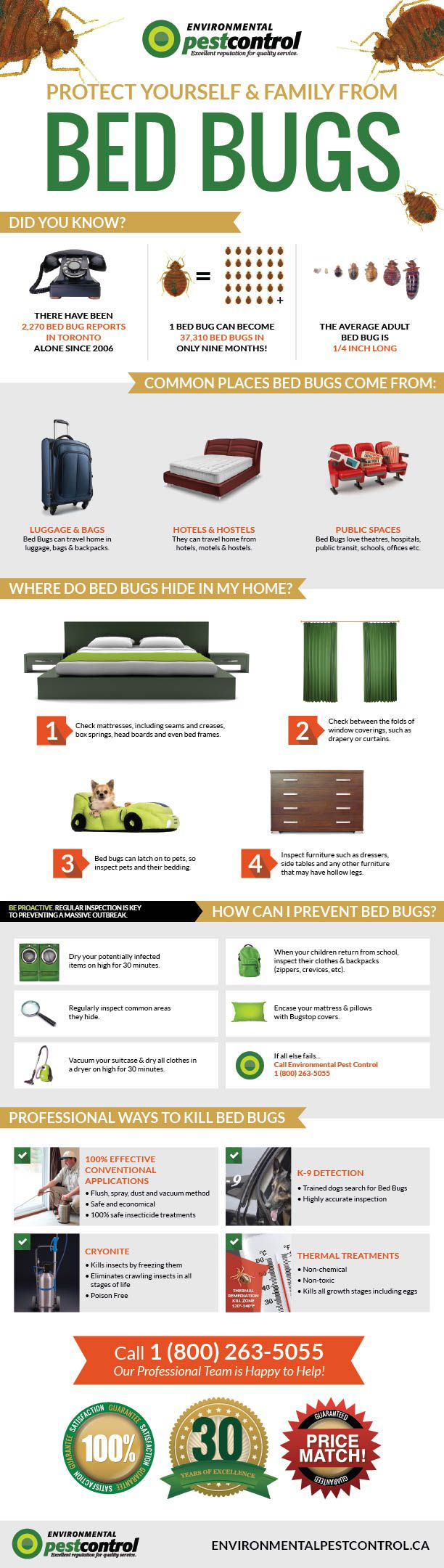 Infographic about getting rid of and killing bed bugs with a pest control exterminator