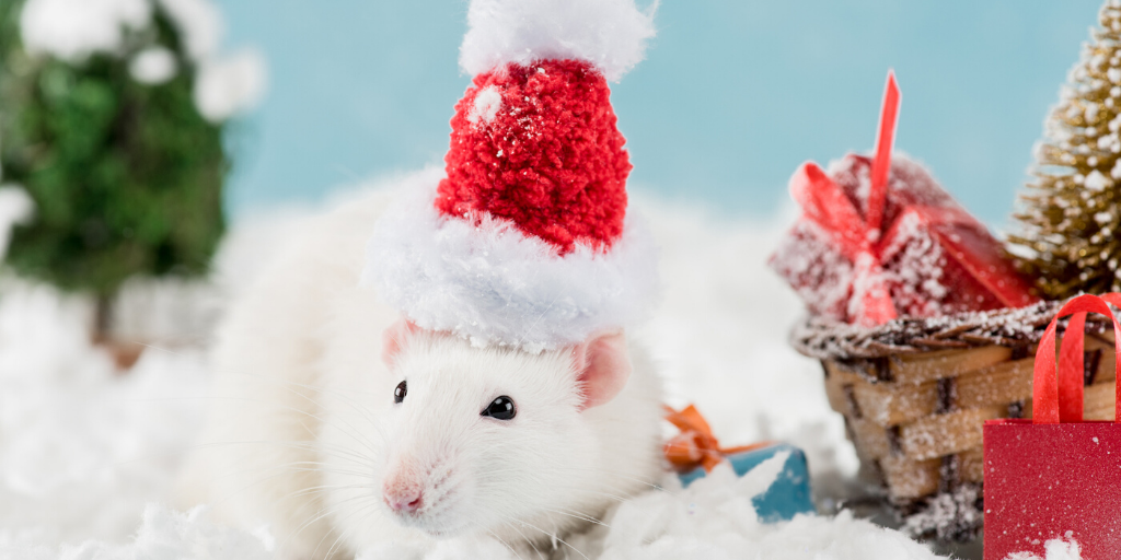 a white mouse wearing a red santa hat
