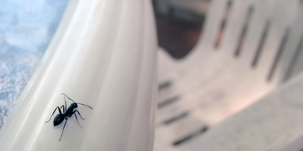 a carpenter ant crawling on a plastic deck chair
