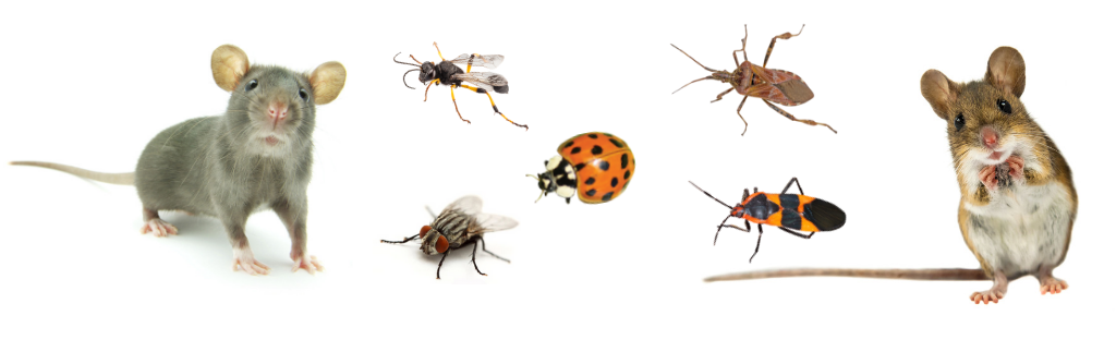 various overwintering pests that environmental pest control treats