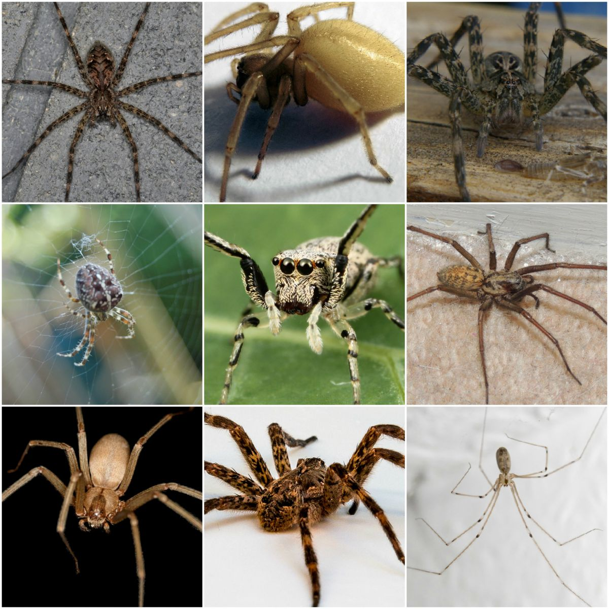 Common Spiders in Ontario