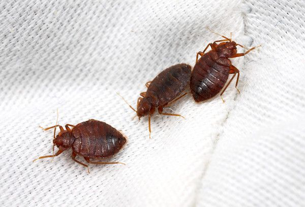 Amazing Are You As A Tenant Responsible For Pest Control Costs?