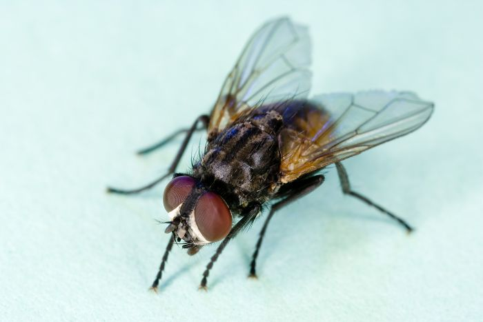 How to kill a house fly