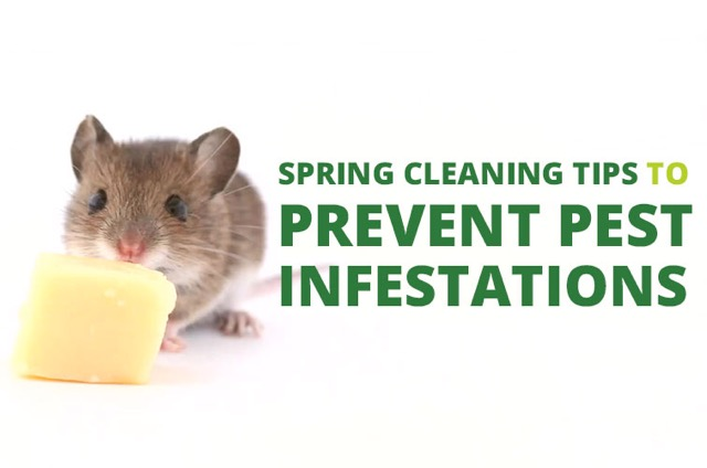 Spring Cleaning Tips to Prevent Pest Infestations